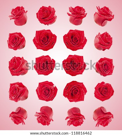 set of red roses flowers composite - stock photo