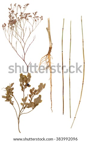 Set of root, leave, stems and flower of various plants isolated - stock photo