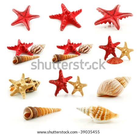 Set of Seashells (Starfish and Scallop) Isolated on White Background - stock photo