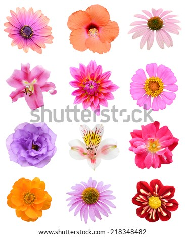 Set of seasonal colored flowers isolated white - stock photo