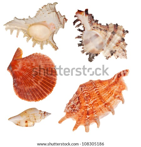 set of shellfishes isolated on white background - stock photo