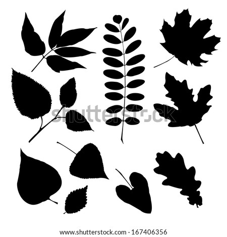 Set of silhouettes of a different leaves - stock photo