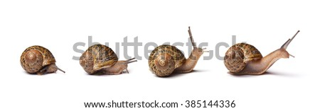Set of snails isolated on white background - stock photo