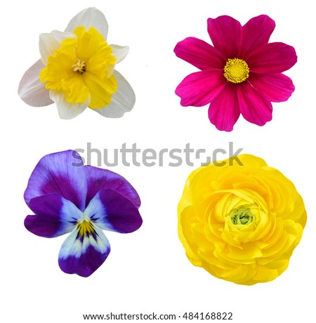set of sping flowers isolated