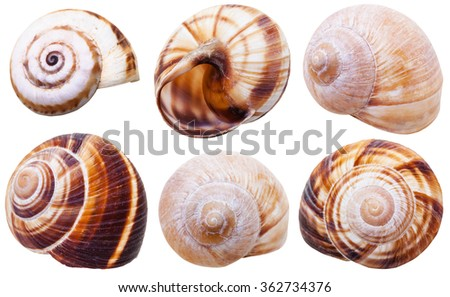 set of spiral mollusc shells of land snails isolated on white background - stock photo