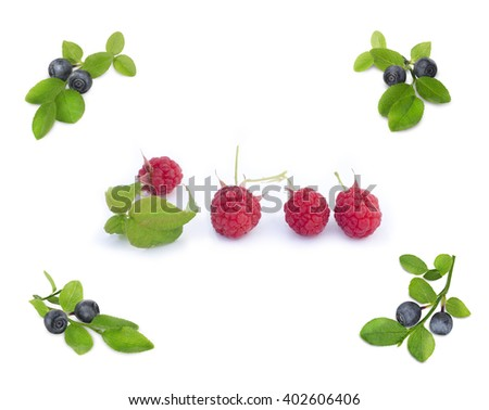 Set of sprigs of blueberries and raspberries with leaves on a white background