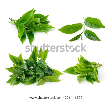 set of tea leaf isolated on white background - stock photo