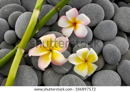 Set of three frangipani with two bamboo grove on gray pebbles  - stock photo
