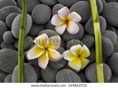 Set of three frangipani with two bamboo grove on pebbles texture - stock photo