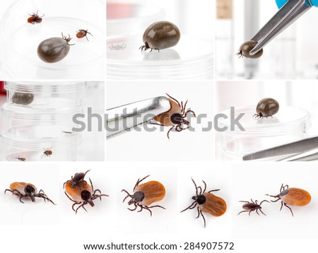 set of Ticks, isolated on a white background - stock photo