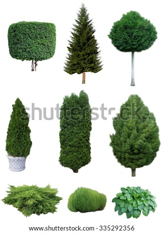 Set of trees and shrubs. Set of various evergreen trees and shrubs for the garden design. - stock photo