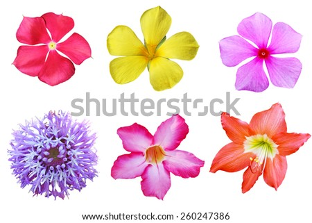 Set of tropical flowers isolated on white background - stock photo