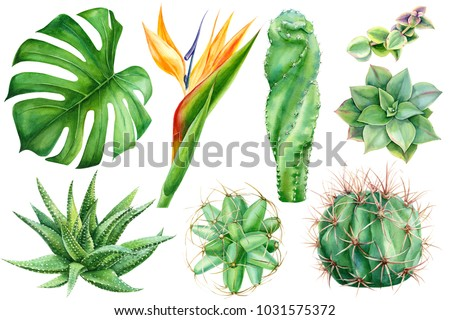 Set tropical plants flowers on white stock illustration 1031575372 set of tropical plants and flowers on white background watercolor hand drawing leaves of mightylinksfo