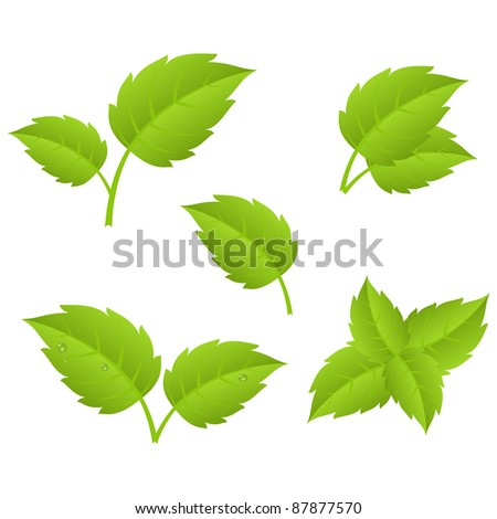Set of various green leaves.