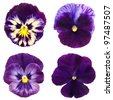 set of violet pansy on white background - stock photo