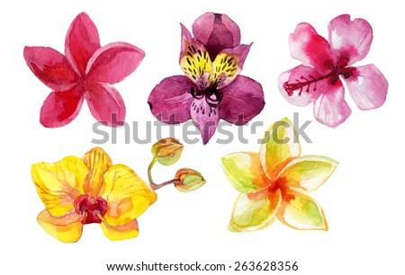 Set of watercolor flowers isolated on white. Hand painted illustration - stock photo