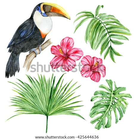 Set of watercolor hand painted exotic elements: Toucan, hibiscus flowers, leaves, palm, monstera isolated on white background. Tropical foliage. Botanical illustration.  - stock photo