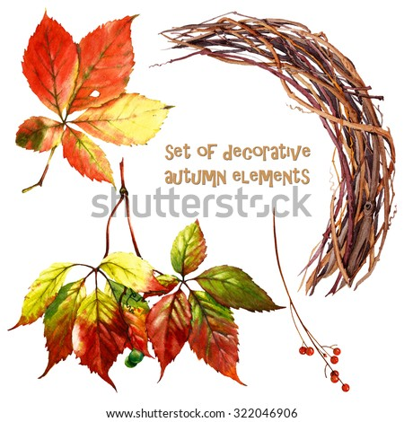 set of watercolor leaves and branches