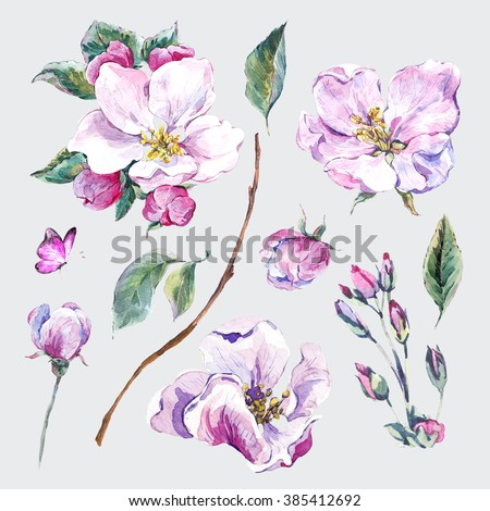 Set of watercolor Spring Nature elements, sprigs separately leaves flower, pink blooming branches cherry, peach, pear, sakura, apple trees and butterflies, isolated botanical watercolor illustration - stock photo