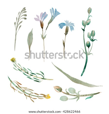 set of watercolor wildflowers and leaves isolate on white background - stock photo