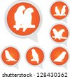Set Of White Parrot Bird on Orange Icons Isolated on White Background - stock vector