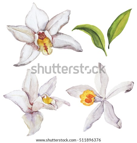 Set of white vanilla orchid flowers and green leaves. Wedding design elements. Hand drawn watercolor illustration.