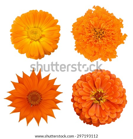 Set 4 orange flowers: zinnia; marigold; calendula, gazania - stock photo