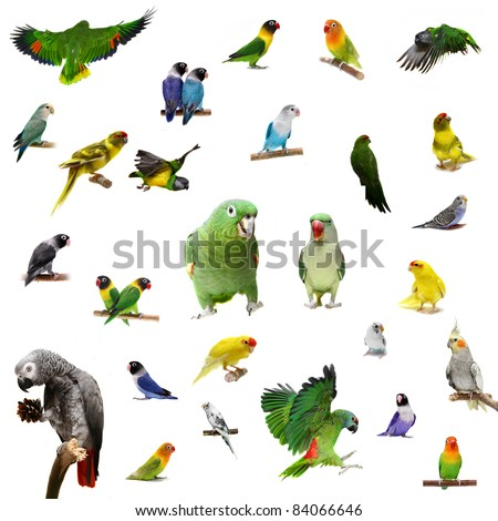 Set parrots and parakeets isolated on white - stock photo