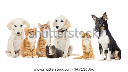Set pets  looking - stock photo
