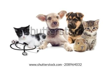set pets on a white background  - stock photo