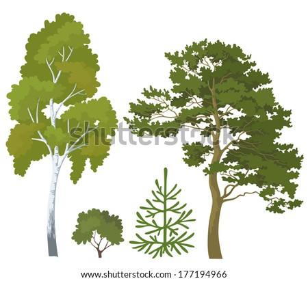 Set plants: birch, pine, fir tree and bush isolated on white background. - stock photo