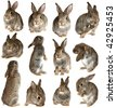 set rabbits on a white background, is isolated. - stock photo