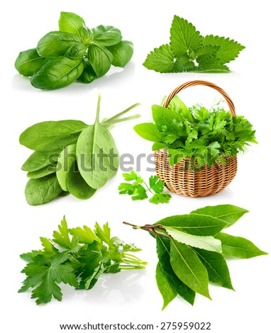 Set spicy herbs. Isolated on white background - stock photo
