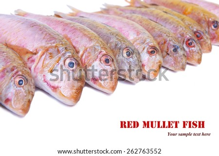 Set the fish on a white background - stock photo