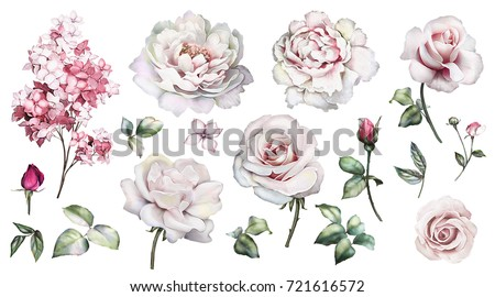 Set watercolor elements of roses, peonies collection garden pink flowers, leaves, branches, Botanic  illustration isolated on white background.  bud of roses