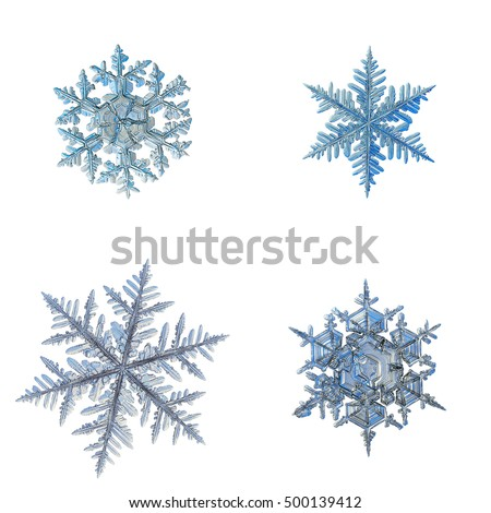 Set with four snowflakes, isolated on white background. This is macro photos of real snow crystals: big stellar dendrites with ornate arms and complex structure.
