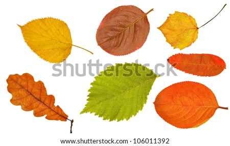 seven different leaves isolated on white background - stock photo