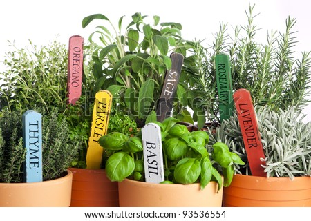 seven kinds of potted garden herbs with wooden name tags - stock photo