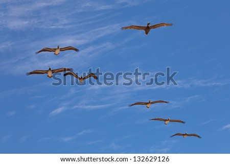 Seven pelicans flying in sun backlight on blue cloudy sky background - stock photo