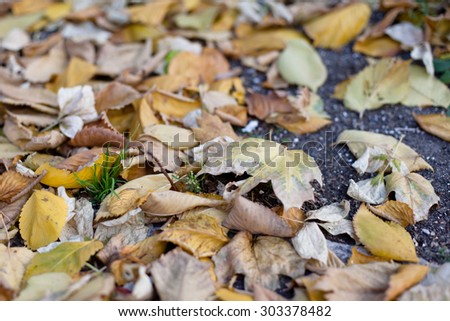 Several brown autumn leaves on the ground