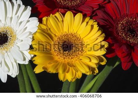 Several colourful gerberas as bouquet