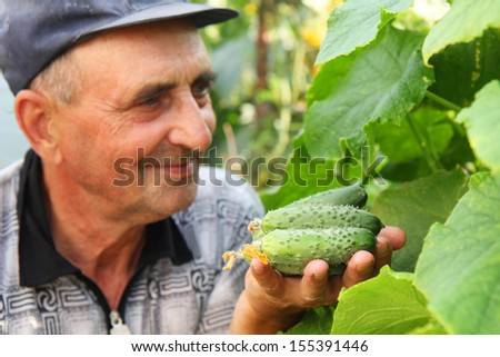 several cucumber in a hand of farmer - stock photo