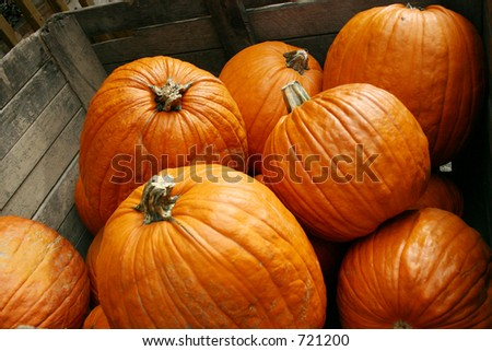 Several Harvested Pumpkins - stock photo
