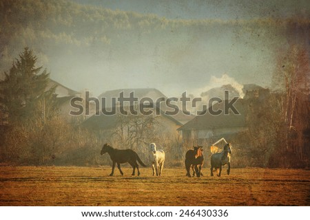 several horses run near old village textured vintage farm and meadows background  - stock photo