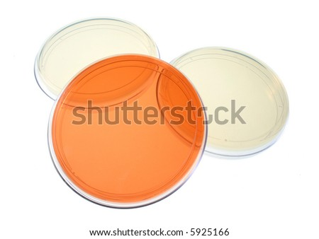 Several petri dishes for medical research - stock photo