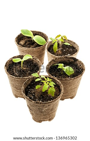 Several potted seedlings growing in biodegradable peat moss pots isolated on white background - stock photo