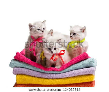 several small furry gray kittens siting on stack colorful towel on white background - stock photo
