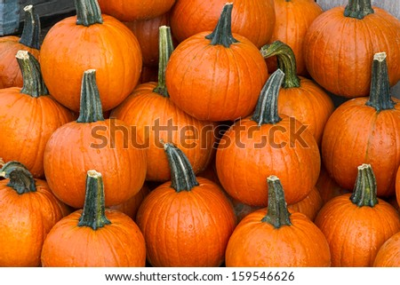 Several small to medium sized orange pumpkins are display at a farmers market produce stand at fall harvest time. - stock photo