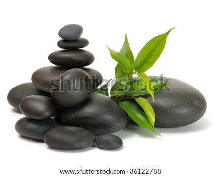 several stones and green sprout