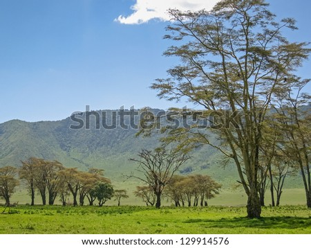 Several trees on sunny meadow against mountain slope and blue sky background. Ngorongoro, Great Rift Valley, Tanzania, East Africa. - stock photo